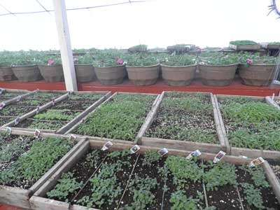 Maxine's Greenhouse